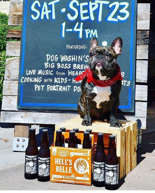 Repost from @wholefoodstriangle!  See you tomorrow!  22 likeswholefoodstriangle| SATURDAY | Rocket is pretty serious about helping the @spcaofwakecounty and all the work they're doing to transform the lives of dogs around the Triangle. That is why he's helping us get the word out about our benefit dog wash in North Raleigh tomorrow! Stop by for a wash, and while your best friend dries off, enjoy samples from @bigbossbrewing, pet portraits from Pablo and live music from Hearts & Daggers! #dogwash #dogsofinstagram #spca #raleigh #raleighnc | : @raleighwhatsup